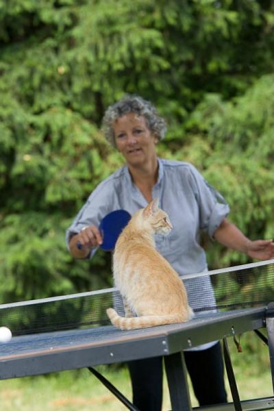 Le chat Caramel adore les parties de ping-pong