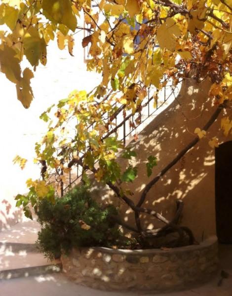 La vigne très ancienne recouvre le patio en été