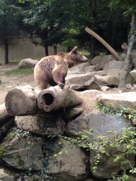 OURS DES PYRENEES ZOO BAGNERES