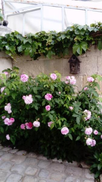 Location vacances Saintes -  Chambre d'hôtes - 6 personnes - Jardin - Photo N° 1