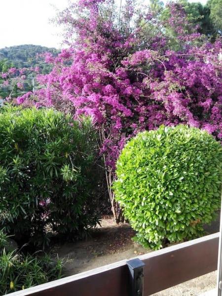 Location vacances Port-Vendres -  Appartement - 4 personnes - Jardin - Photo N° 1