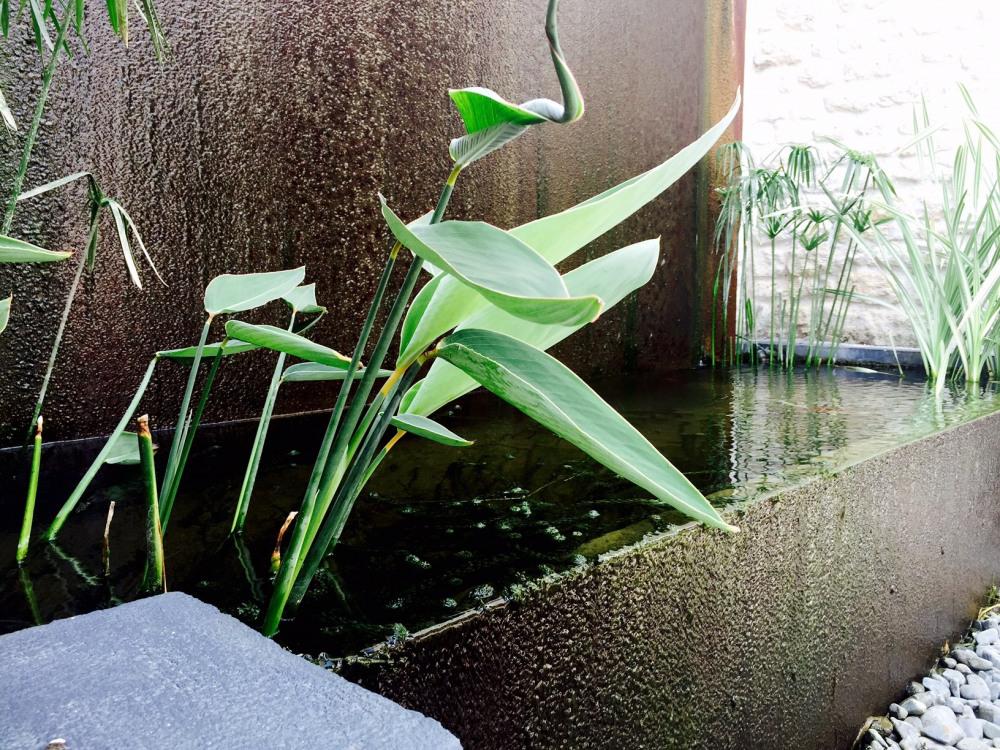 les bassins japonais de ma lampion et ses carpes Koi- Royan - Charente maritime