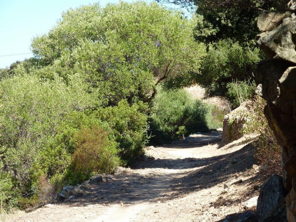 des chemins de randonnée partent au pied de la maison sous les chênes