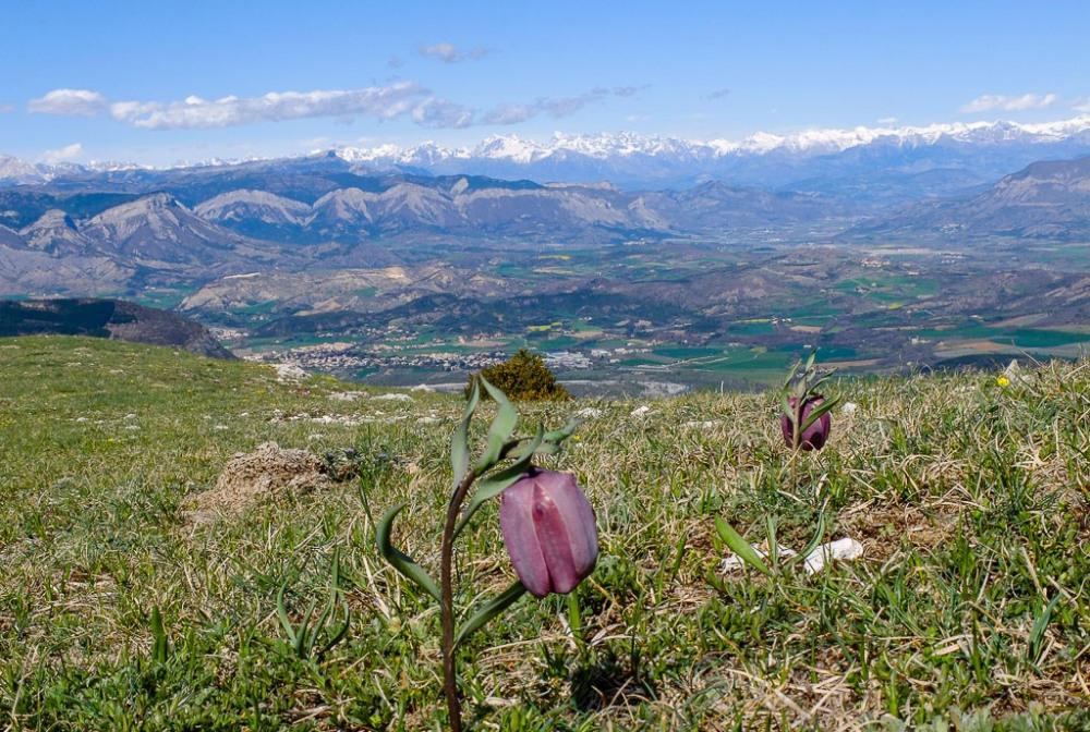 La crête de St Cyr au printemps