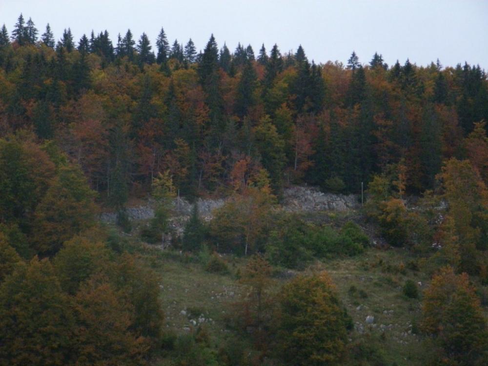 la forêt du risoux en automne
