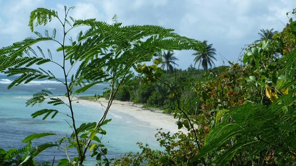 Plage de Bois Jolan à proximité à pied de kokoplaj-piscine