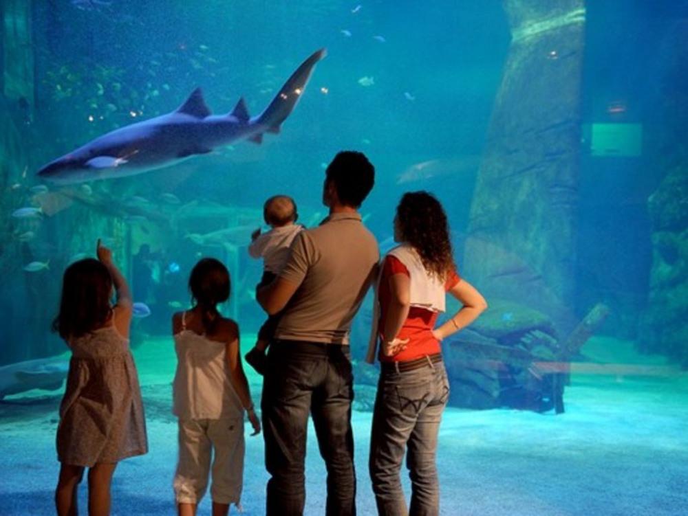 le seaquarium (musée de la mer)