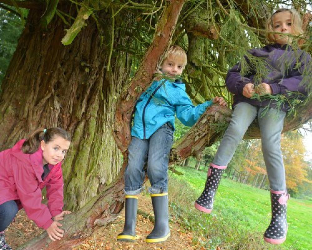 Un peu d'acrobatie dans les arbres séculaires du Parc  du Masbareau
