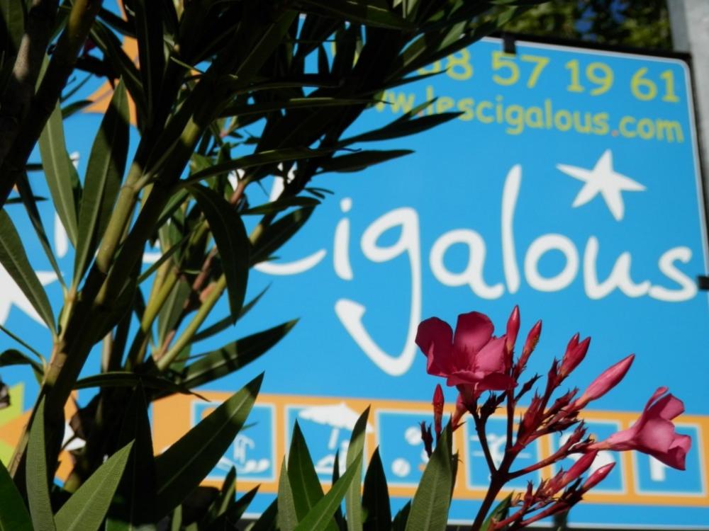 Les Cigalous