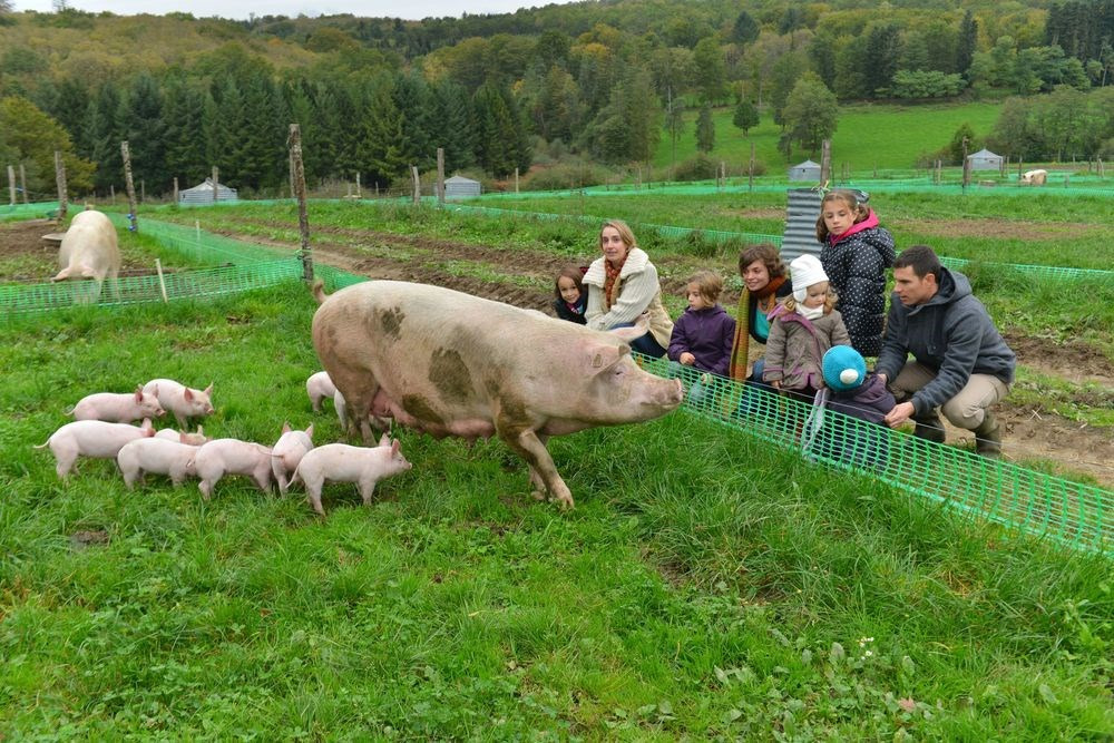 Découverte de l'élevage BIO du Masbareau,  la maternité et les petits porcelet