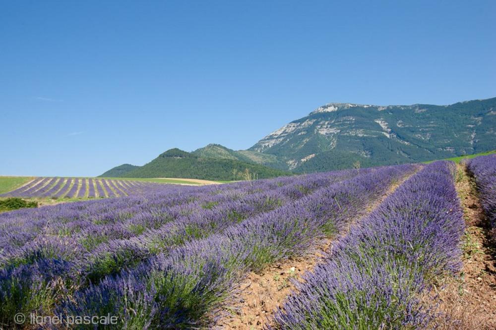 à 20 km commence la Provence et ses champs de lavande qui fleurit de juillet à a