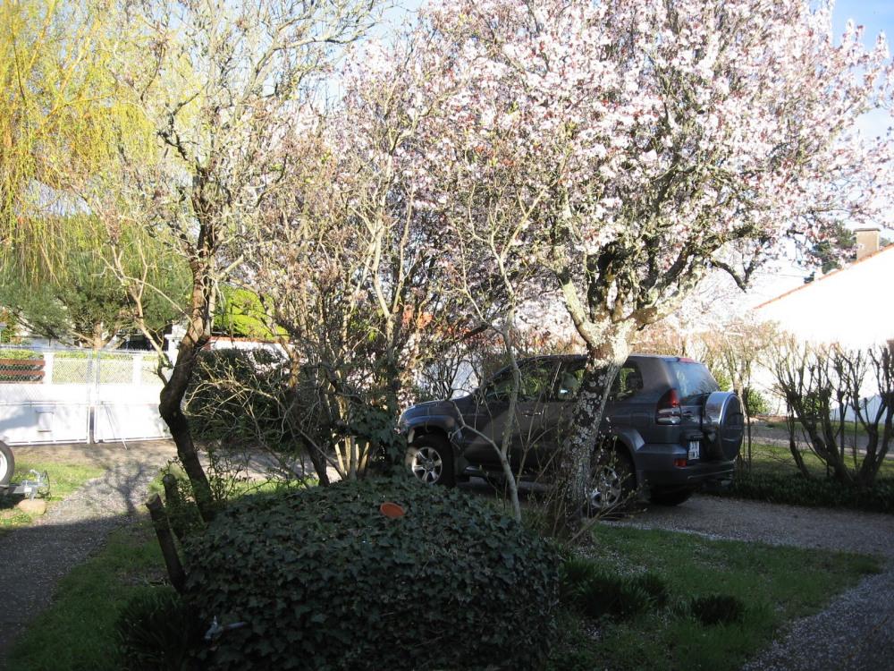 Le jardin côté rue