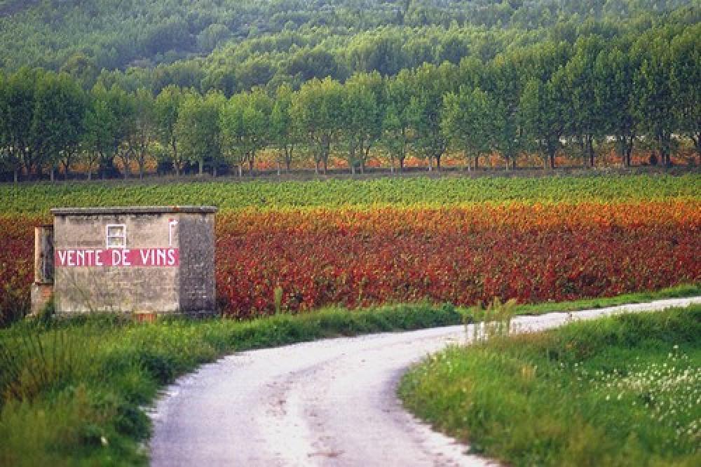 """Le vin """"Cote de Provence"""""""