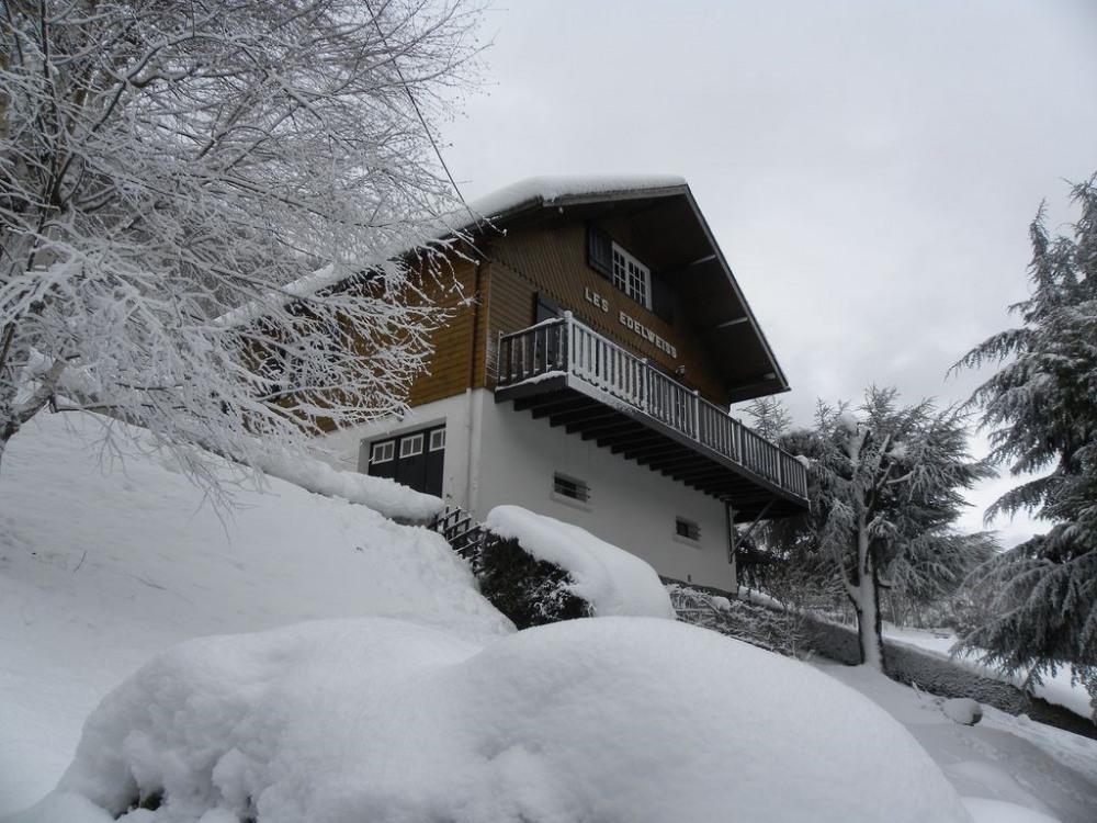 vue du jardin en hiver