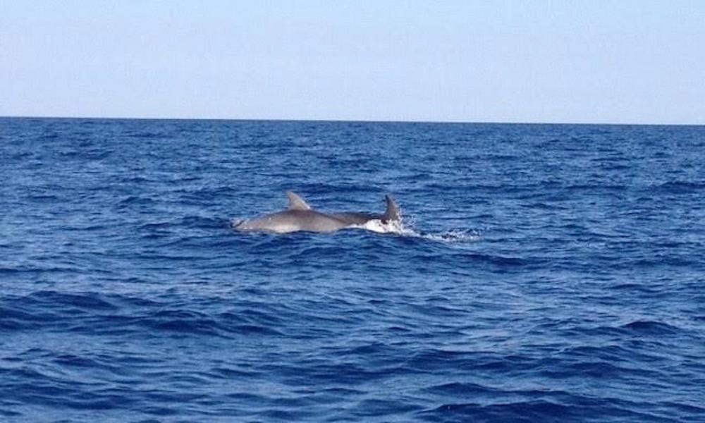 dauphins dans la baie