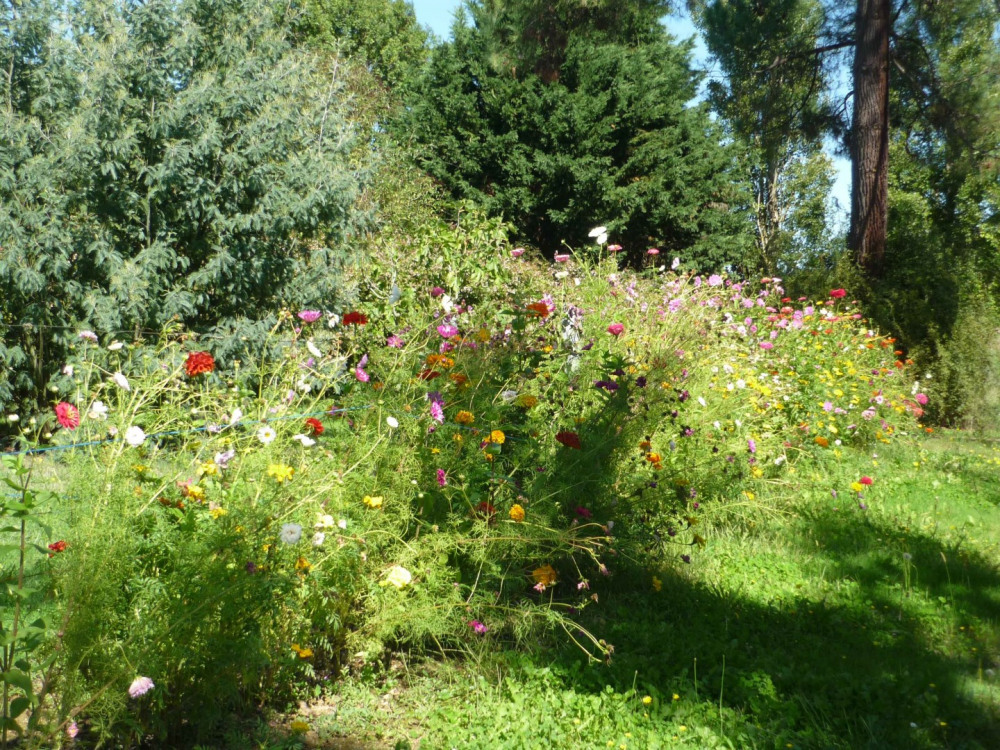 Dans le jardin ...