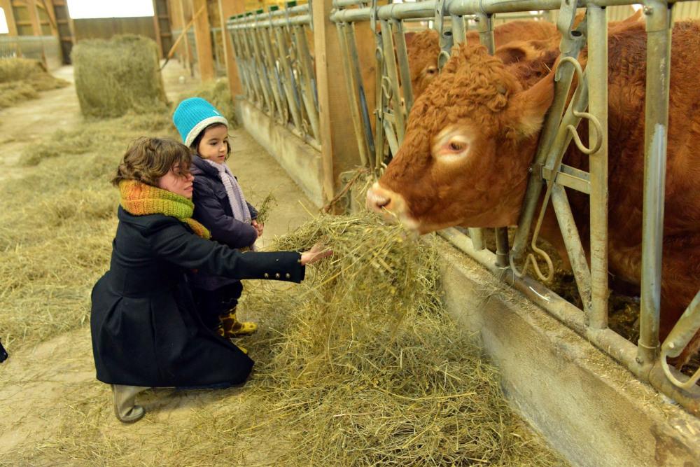 L'élevage BIO du Masbareau, une super découverte de vacances en Limousin,