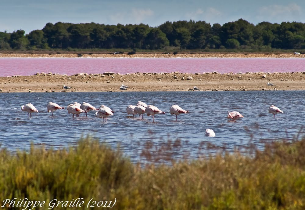 lac aux flamands roses