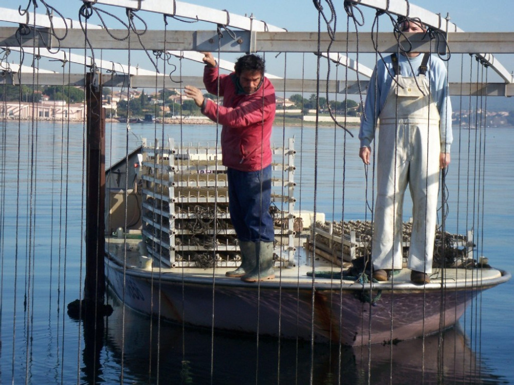 les parcs à huîtres du bassin de Thau