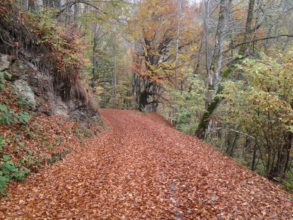 chemin proche en automne