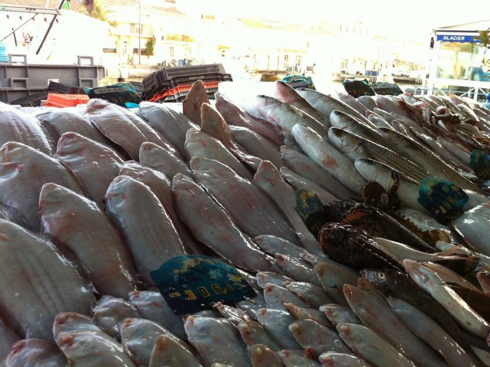 vente de poissons sur le quai direct du pêcheur