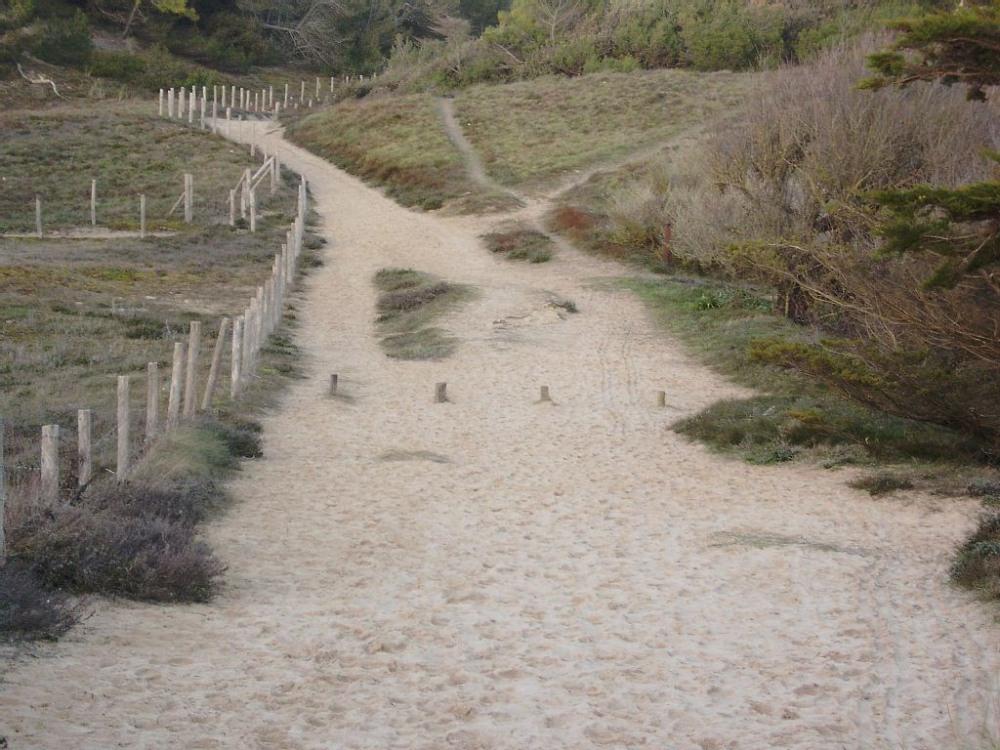 Départ de sentiers dans les dunes