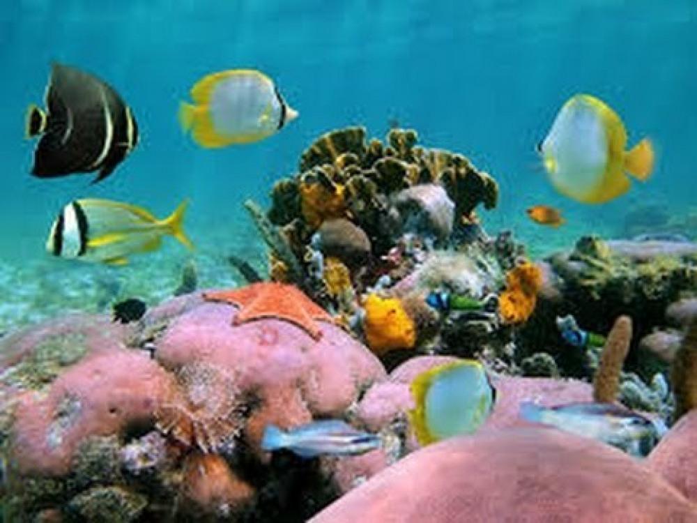 réserve Cousteau idéale pour vos baptêmes de plongée