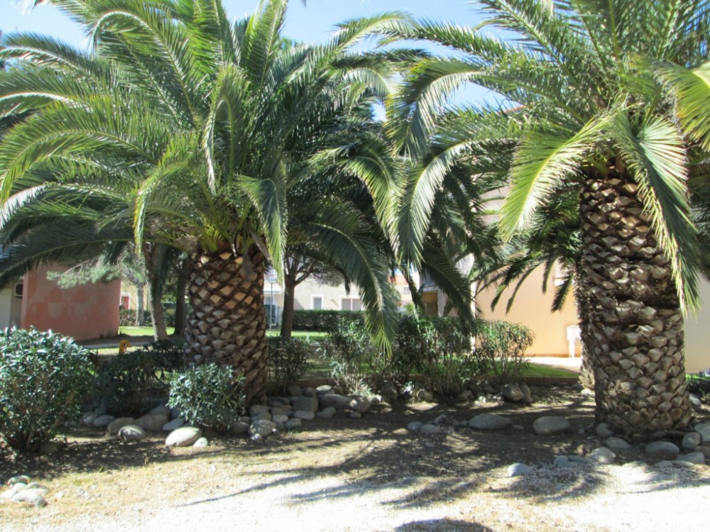 palmiers devant appart.