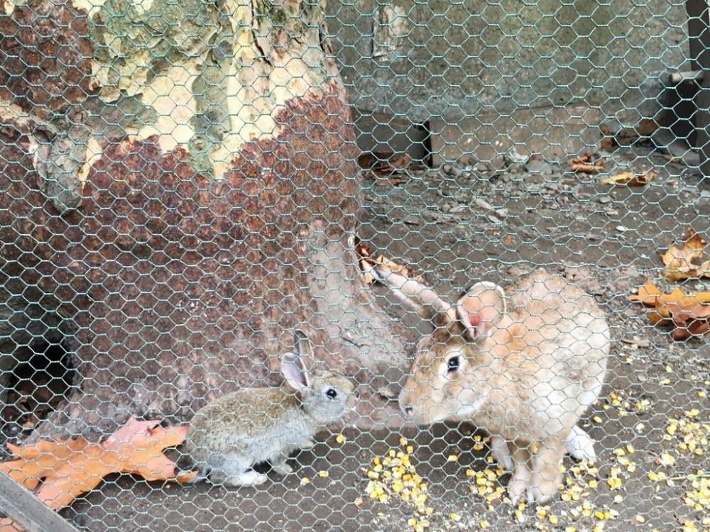 lapins de la propriété