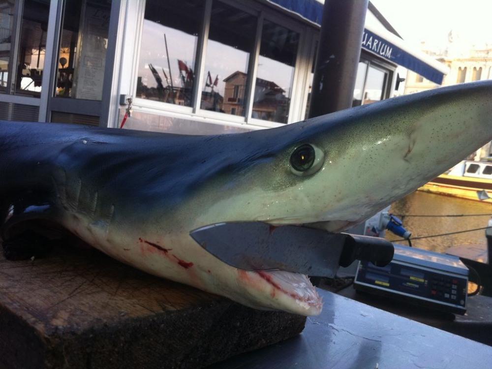 vente de requin, thons et espadons sur le quai