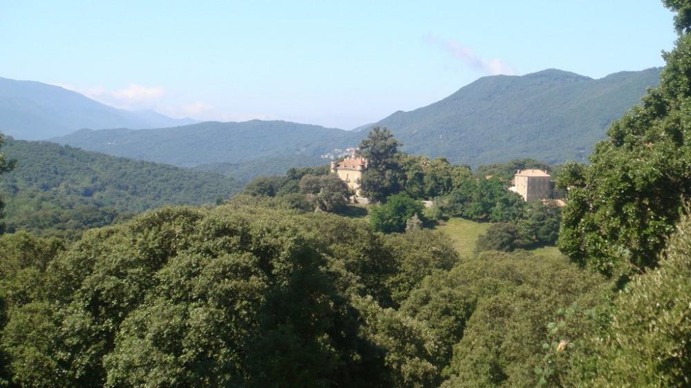 Gite dans oliveraie , à Santa-Maria-Siché