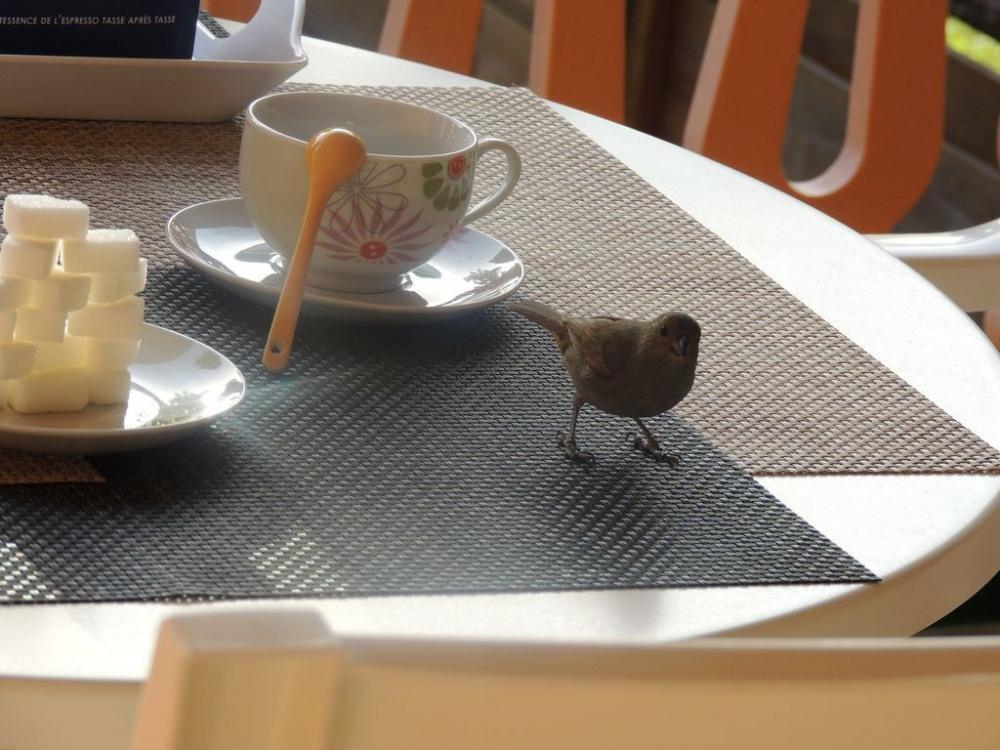 """rendez vous tous les matins avec """"biscott"""" et ses amis"""