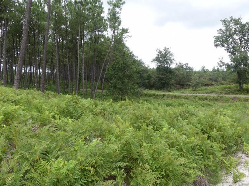 Vente terrain onesse et laharie 1780m 58000 for Combien coute un terrain constructible