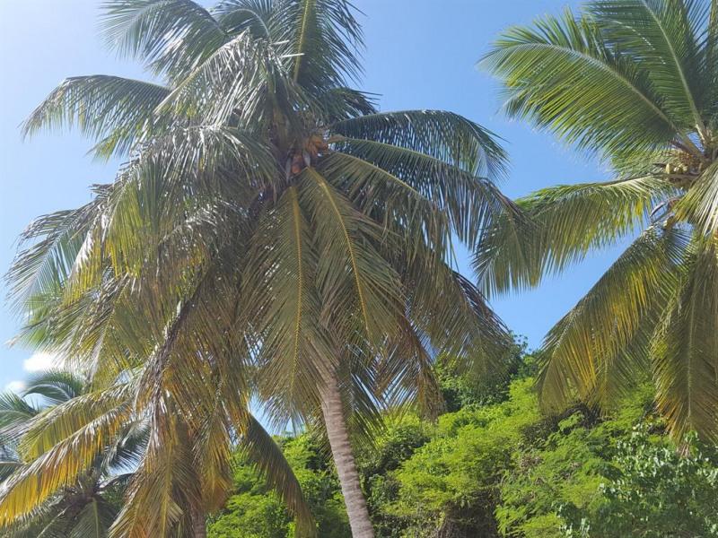 Vacances sous les cocotiers