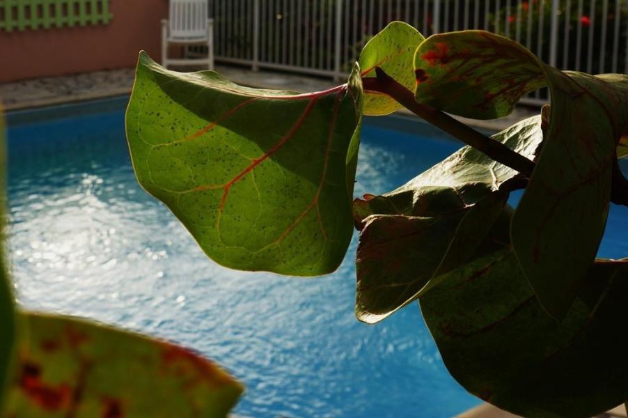 Studio pour 4 pers. avec piscine, Sainte-Anne